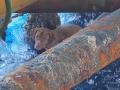 VIDEO Emotívna záchrana psa vďaka hrdinským robotníkom: Plával 220 kilometrov od pobrežia