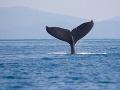 Kanada prijala prelomový zákon: Trvalo zakázala odchyt a chov delfínov aj veľrýb