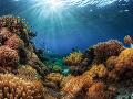 Vedci odhalili, aké množstvo vírusov sa skrýva v oceánoch: Toto obrovské číslo prekvapilo aj ich