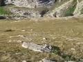 Medvedica šíri v horách smrť: Ľudia žijú v strachu, krízové jednanie vlády!