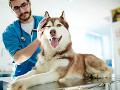 Krutý trest pre veterinára: Neuveríte, za čo mu hrozí doživotie