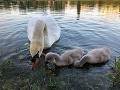 Smutná správa zo Štrkoveckého jazera: Príbeh, ktorý sledovalo celé Slovensko, končí tragicky