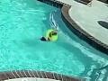 Dráma v bazéne: VIDEO Dievčatko (3) sa zrazu začalo topiť, neuveríte, kto ho zachránil