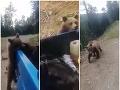 Muži nechali v lese odpad, prekvapil ich medveď