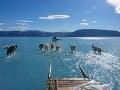 FOTO ukázalo mimoriadne krutú pravdu: Psy v Grónsku namiesto ľadu išli po vode