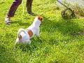 Dôchodca venčil svojho psa, ten ho zatiahol do kríkov: Šokujúci nález v hustom poraste