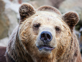 Na turistov v Západných Tatrách sa vyrútil medveď: Zbesilý útek pred šelmou sa skončil zranením