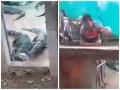 Matka sa starala o bábätko: VIDEO Jej dcérka (†2) sa dostala do výbehu s krokodílmi, strašná smrť
