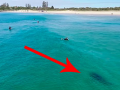 Dron odhalil hroziacu tragédiu: VIDEO Na nič netušiacich surfistov sa hnal veľký žralok