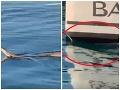 Strach pri chorvátskom Šibeniku: VIDEO Turista natočil, ako sa na loď snaží vyliezť had