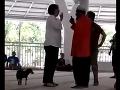 VIDEO Žena prišla v Indonézii do mešity so psom, zatkli ju za rúhanie sa