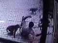 Horor na ulici: VIDEO: Muža napadlo stádo opíc, ľudia sa kvôli nim boja vychádzať z domov