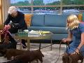 Holly Willoughby mala v rannom vysielaní niekoľko jazvečíkov.