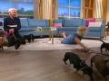 Holly Willoughby neudržala psíkov.