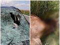 Vodičovi pri Michalovciach skrížil cestu jeleň, strašné FOTO po tvrdom náraze
