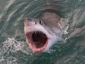 Neskutočné VIDEO priamo z oceánu: Pán labužník žralok dostal chuť... Ľuďom poriadne stúpol tlak!