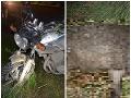 Mrazivá havária pri Lučenci: FOTO Motorkár bol bez šance, hrozné následky po zrážke s diviakom