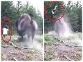 Dráma v národnom parku: Rozzúrený bizón napadol dievčatko (9), desivý útok na VIDEU
