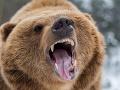 Pri obci Kľačno sa pohybuje medveď: Ľudia majú strach, roztrhal už aj ovcu