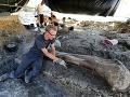 Vedci objavili gigantickú kosť dinosaura