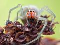 Horor na rodinnom posedení v Stupave: Danku (37) uhryzol jedovatý pavúk, bolesť a paralýza