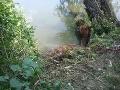 FOTO Náročná záchranná akcia: Z rieky Čierna Voda museli hasiči ťahať koňa
