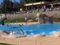 V Španielsku sa šíri nechutný trend: Po tomto zistení tam už nevkročíte do žiadneho bazéna