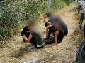FOTO Pri diaľnici D2 v Bratislave zadržali 11 nelegálnych migrantov: Ďalších chytili v Rakúsku