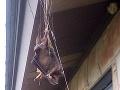 Žena šla ráno do práce, toto vidieť nechcela! VIDEO odporného výjavu, ktorý sa dial na verande