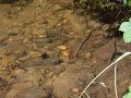 Smutný nález v potoku