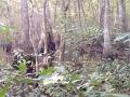 Vraj najlepšie VIDEO legendárnej príšery! Mladík nakrútil v lese podivného tvora