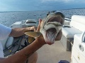 Manželia v jazere ulovili naozajstné čudo: FOTO ryby s dvoma ústami ohromila internet