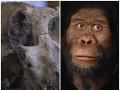 Vedci objavili lebku pračloveka starú 3,8 milióna rokov: Dychberúce VIDEO, ako ju zrekonštruovali