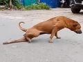 Ľuďom pri pohľade na pouličného psa drása srdce: VIDEO odhalilo šokujúcu pravdu