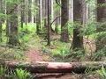 VIDEO Profesor a jeho študenti narazili uprostred kanadskej divočiny na úžasný objav