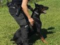 FOTO Skvelá práca policajného psa Irona: Vypátral ukradnutý trezor s 35-tisíc eurami