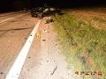 FOTO Desivá nočná zrážka pri Trenčíne: Vodičke vbehol do cesty jeleň, dvaja zranení