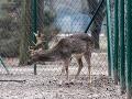 Zviera opäť obeťou nezodpovednosti: V nitrianskom parku uhynul daniel, zrejme pre zábavu tínedžerov