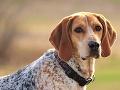 Tragédia v Česku: Starček s manželkou venčil psa, zviera sa ocitlo v rieke, muž sa v snahe zachrániť ho utopil