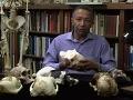 Haile-Selassie ukazuje model lebky