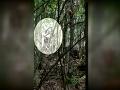 VIDEO Muž nastražil v lese tajné kamery: Podarilo sa mu nakrútiť to, po čom celý život pátra!