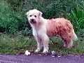 Dojímavý príbeh: Pes čakal štyri roky pri ceste na svoju majiteľku! Neuveríte, čo urobil, keď prišla