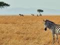 V Keni sa objavilo