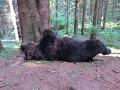 Zastrelený medveď v národnom parku.
