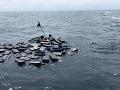 Pomoc v najvyššej núdzi: Neuveríte, čo zachránilo pašerákov z Kolumbie pred utopením!