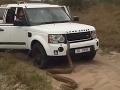 Adrenalínový zážitok v Južnej Afrike: VIDEO Hlúpy nápad, turisti utekali pred obrovským pytónom