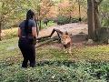 Žena šokovala návštevníkov zoo: VIDEO Vkročila do výbehu s levom a neuveríte, čo stvárala