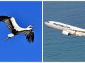 Lietadlo Smartwings zastavil vták: Českí pasažieri strávili hodiny na prázdnom letisku bez vody a informácií