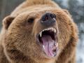 Cestári v noci na R2 zrazili medveďa: Pátranie nepomohlo, zviera sa nenašlo