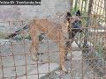 FOTO Útok zúrivých psov v Trenčianskom kraji: Dedko (76) bol na svojej záhradke keď... nečakaný masaker!